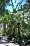 palmeraie d'Elche Jardin du Curé